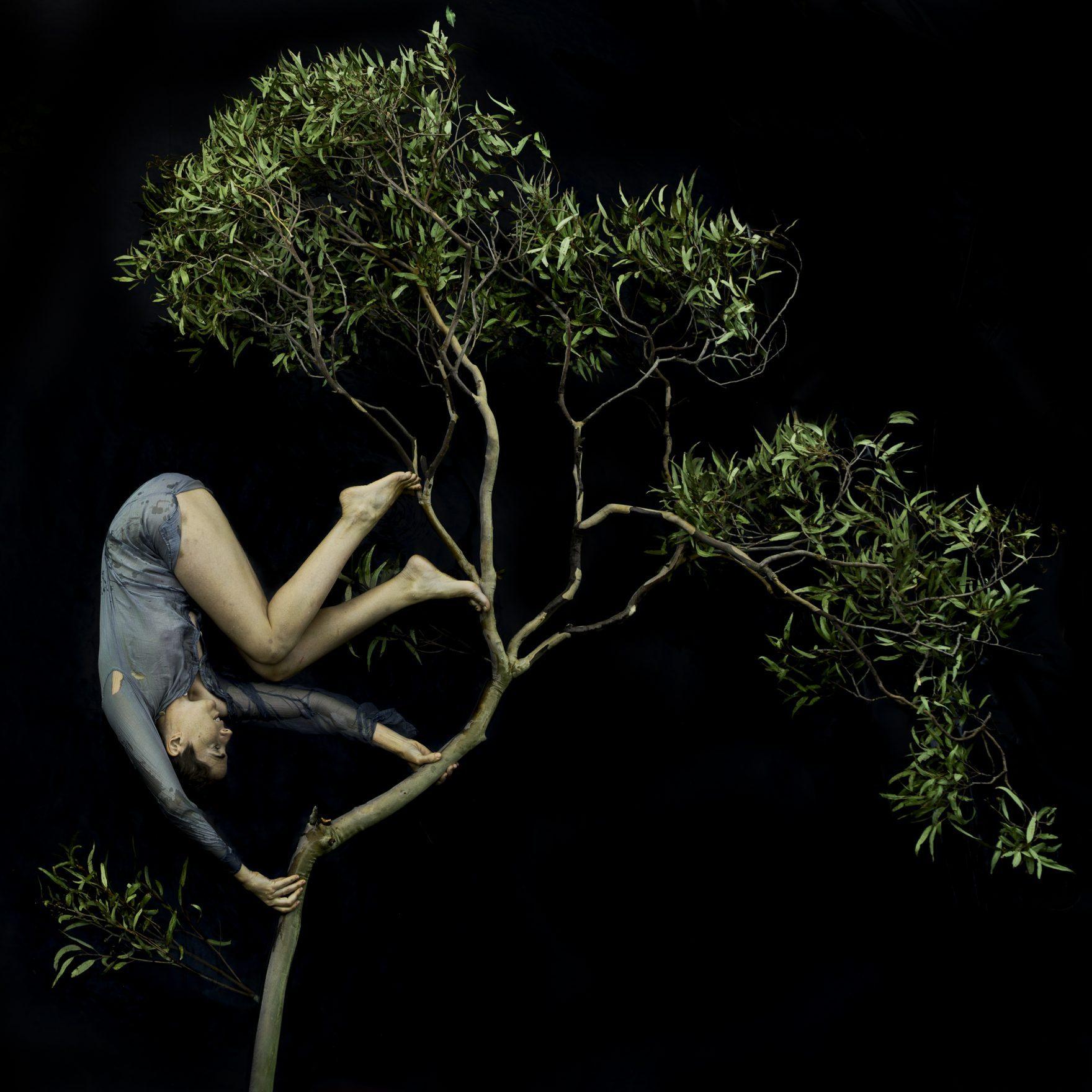 © Tamara Dean & Michael Reid SydneyBerlin_Tumbling through the treetops, 2020
